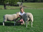 charlotte-and-lambs